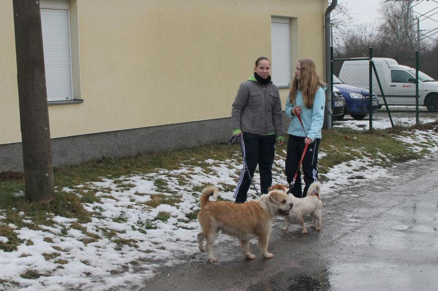 Zwei Schülerinnen während sie mit Hunden spazieren gehen